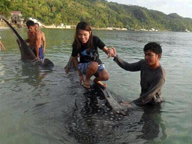 Sërf mbi trupin e peshkaqenit .!!( Foto)